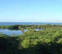 1900 vierkante meter mangrovebos wordt gekapt
