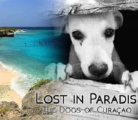 'Lost in Paradise', film over zwerfonden op Curaçao