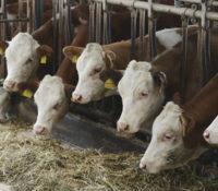 Inspectie: diergeneeskunde wettelijk regelen