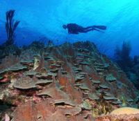 Opvallend gezond Koraalrif ontdekt bij Saba