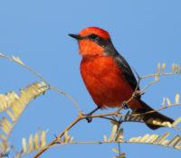 Nieuwe vogelsoort gespot op het eiland tijdens telling in maart